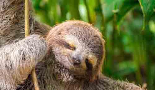 Sloth at Costa Rica Yoga Retreat