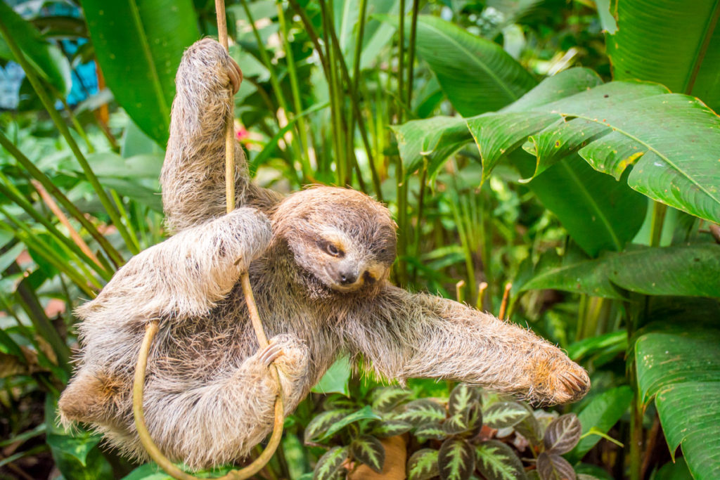Sloth during one of the Eco tours in Costa Rica during green season